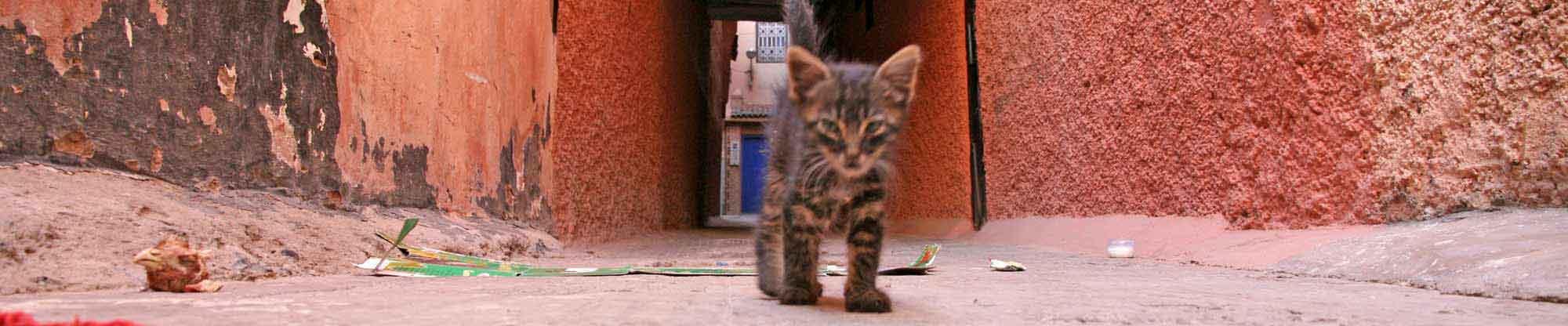 marrakech-katze-blaue_tuer