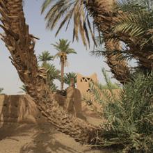 Wüstenfahrt: Oase